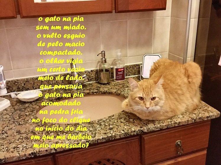 gato na pia